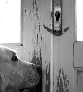 Ensam hund