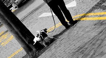Äldre hund