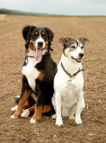 Två hundar som blev rumsrena vid olika ålder
