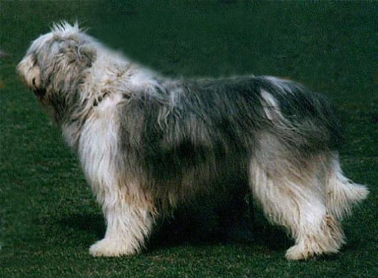 Juzjnorusskaja ovtjarka