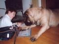 Bild på Mastiff