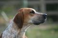 Bild på Foxhound